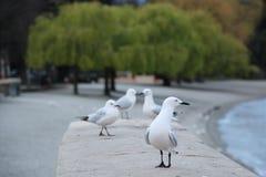 海鸥群 库存照片