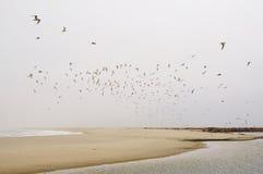 海鸥群 免版税库存照片