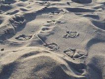 海鸥脚印 免版税图库摄影