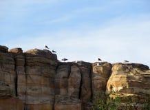 海鸥被栖息在岩石峭壁顶部 图库摄影