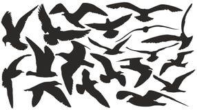 海鸥被设置的剪影 库存照片