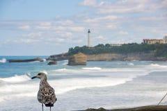 海鸥观看在la重创的色球的,伟大的海滩比亚利兹 免版税库存图片