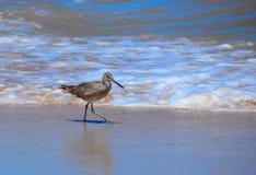海鸥走的海洋海滩 免版税库存照片