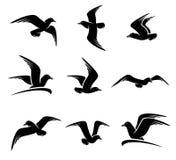 海鸥集合 向量 免版税图库摄影