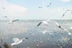 海鸥飞行到在Bangpu,泰国的日落里 库存照片