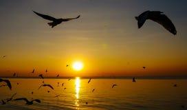 海鸥飞行和日落 库存照片