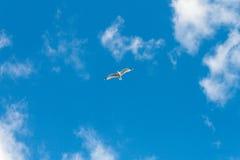 海鸥飞行在一个蓝色夏日 免版税库存图片