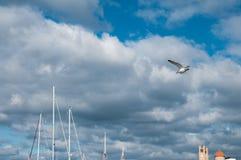 海鸥飞行在口岸 免版税库存照片