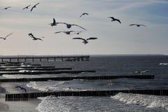 海鸥飞行在海 库存图片