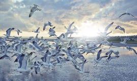 海鸥飞行在阳光下被设置在海 图库摄影