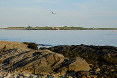 海鸥飞行在头顶上在岩石海岸的日落 免版税库存图片