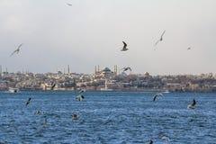 海鸥飞行在Bosphorus海峡的, Ayasofya圣徒索菲娅清真寺在背景中能被看见 库存图片