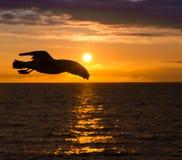 海鸥飞行对橙色日落 免版税图库摄影