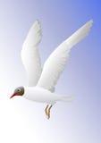 海鸥飞行 免版税库存照片