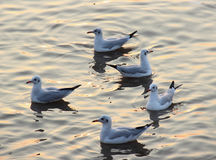 海鸥鸟 免版税库存照片