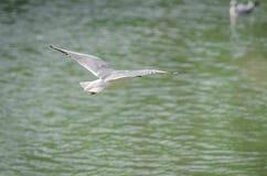 海鸥以各种各样的情况 库存图片