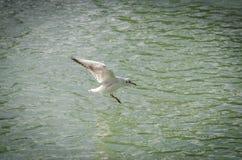 海鸥以各种各样的情况 库存照片