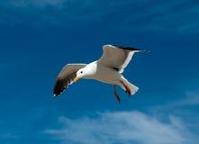 海鸥 库存照片