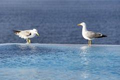 海鸥 图库摄影