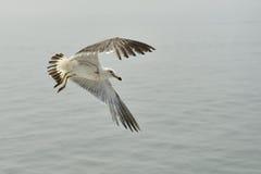 海鸥5 库存图片