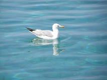海鸥 免版税库存照片
