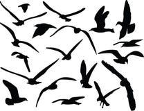海鸥- 免版税库存照片