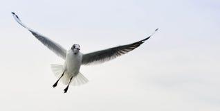 海鸥2 库存照片