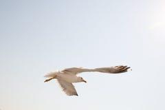 3海鸥 免版税图库摄影