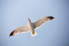 海鸥16 库存照片
