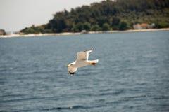 海鸥16 免版税库存照片