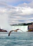 海鸥ang尼亚加拉瀑布 免版税库存图片
