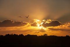 海鸥asbove在日落的沙丘 库存照片