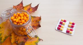 海鼠李莓果和秋叶,替代医学 库存图片