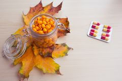 海鼠李莓果和秋叶,替代医学 免版税库存照片