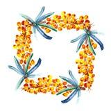 海鼠李莓果花圈  手拉的水彩绘画 向量例证