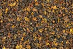 海鼠李莓果04 库存图片
