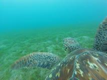 海龟佩戴水肺的潜水 免版税库存图片