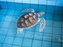 海龟保护中心,泰国 免版税库存照片