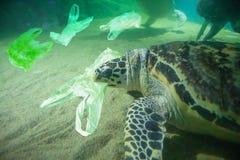 海龟吃塑料袋海洋污染概念 免版税库存照片