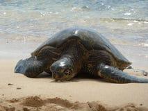 海龟和海浪 免版税库存照片