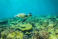 海龟和美好的水下的场面与海洋生物在阳光下在蓝色海 马尔代夫水下的天堂 免版税库存图片