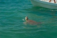 海龟在西安的钾生物圈登高呼吸' 库存图片