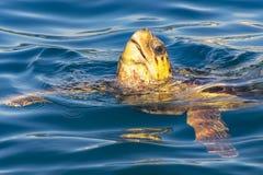 海龟海龟乌龟来与它的在蓝色海上的头在扎金索斯州,希腊 库存图片