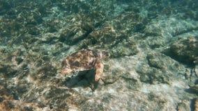 海龟海龟海龟在爱琴海 影视素材