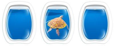 海龟舷窗窗口 免版税库存照片