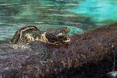 海龟 库存照片
