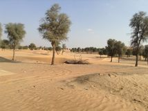 海,沙漠,阿布扎比,阿拉伯联合酋长国 库存照片