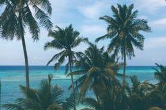 海,蓝色戏院的美好的绿松石视图有棕榈树的 免版税库存照片