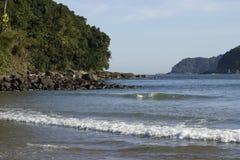 海滩、森林和海岛 库存照片