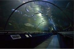 海洋世界,海在爱丁堡附近的世界水族馆 免版税库存照片